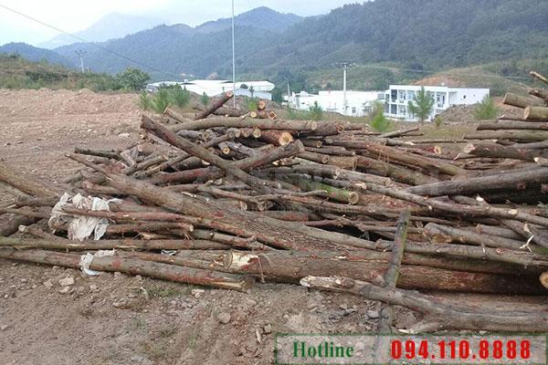 Lap dat may nghien GM 200SM tại Quang Ninh 4